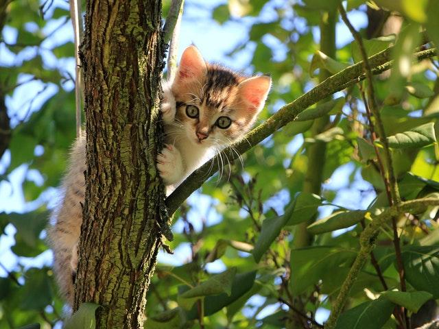 Katter älskar träd!